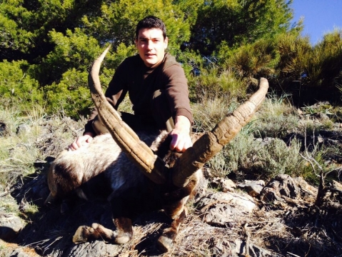 South east  Ibex (Sierra Nevada) Spanish Ibex